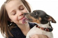 El significado de la lamida de un perro